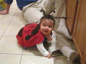Halloween 20 (ladybug)