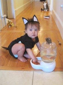 Halloween 27 (cat)