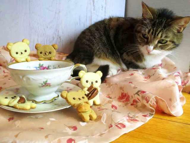 teddy-cookies-chani