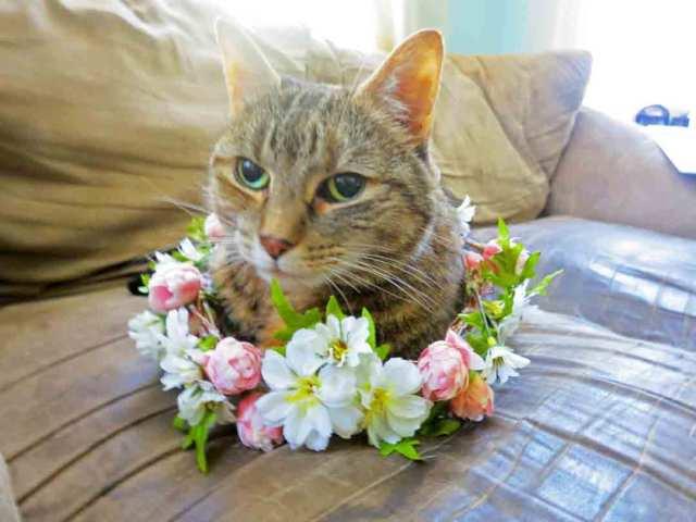 flower-wreath-cat