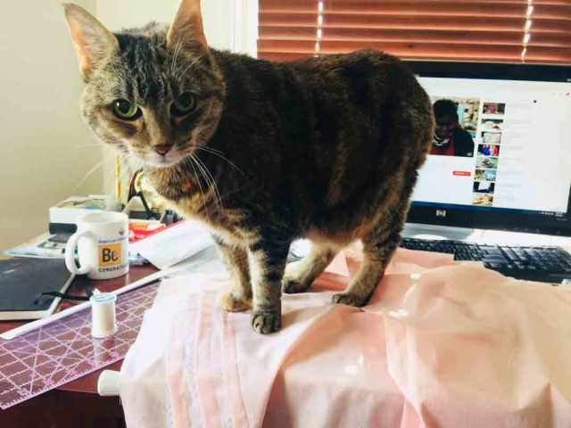picnic-cat-help