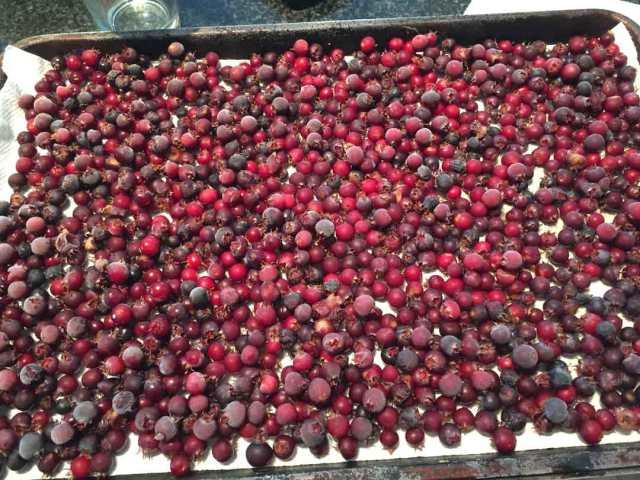 juneberries-frozen