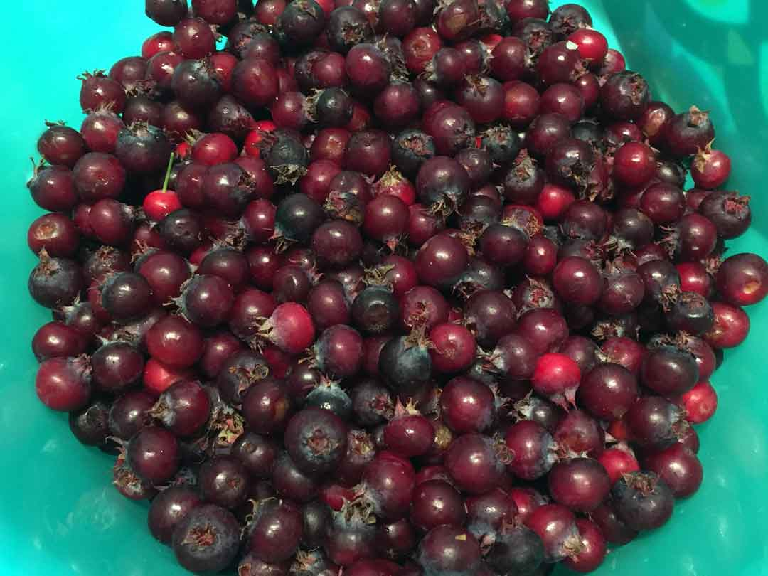 juneberry-jam-berries